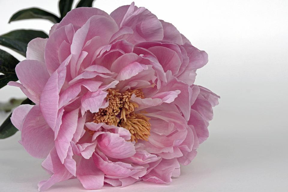 Nomi Di Fiori Rosa.Di Che Fiore Sei Come Il Tuo Fiore Preferito Racconta Di Te