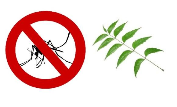 zanzara neem