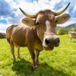 Vuoi mangiare sano? Adotta una azienda agricola!