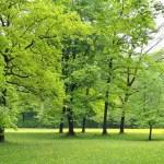 Vivi vicino agli alberi, sarai più sano