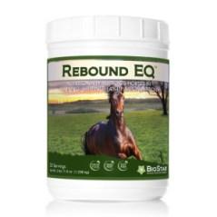 BioStar Rebound EQ