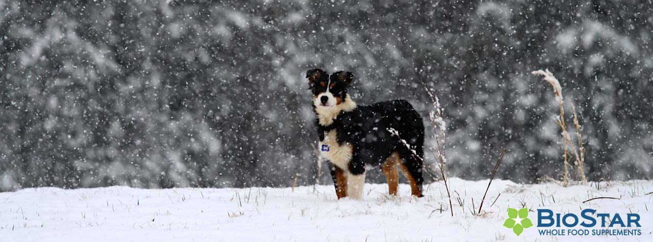 It's a lovely winter for dogs.