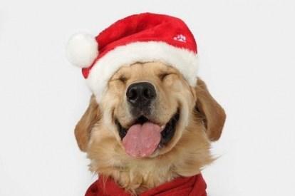 Santa Paws christmas holidays biostar
