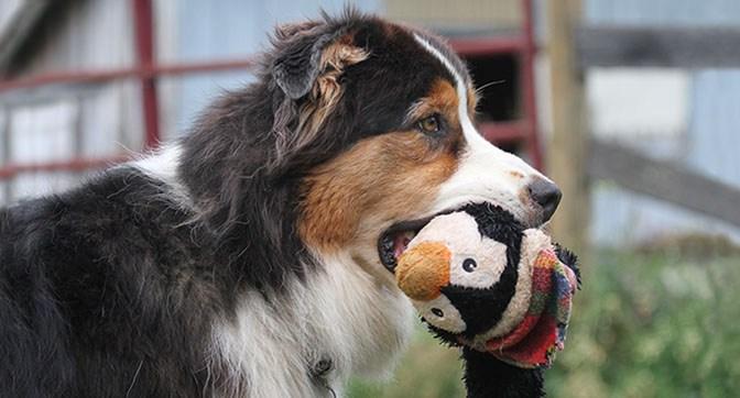 Kemosabe canine happy holiday tips