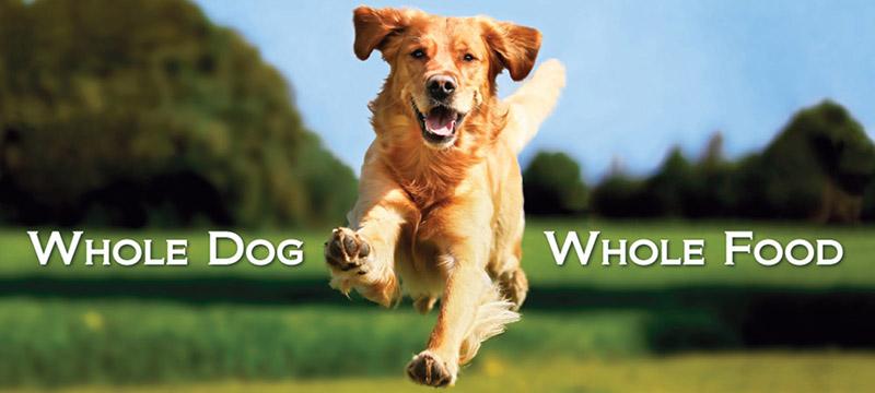 BioStar blog Canine Health