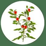 BioStar US ingredient ashwagandha