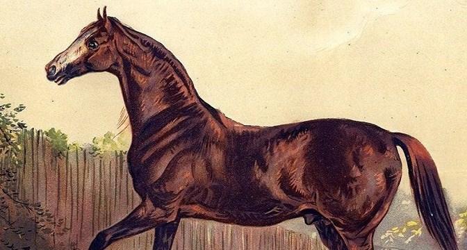 Feeding Horses in the 1800s - BioStar US