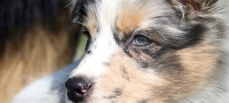 The Puppy Cometh by BioStar US