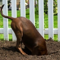 dogs eat dirt