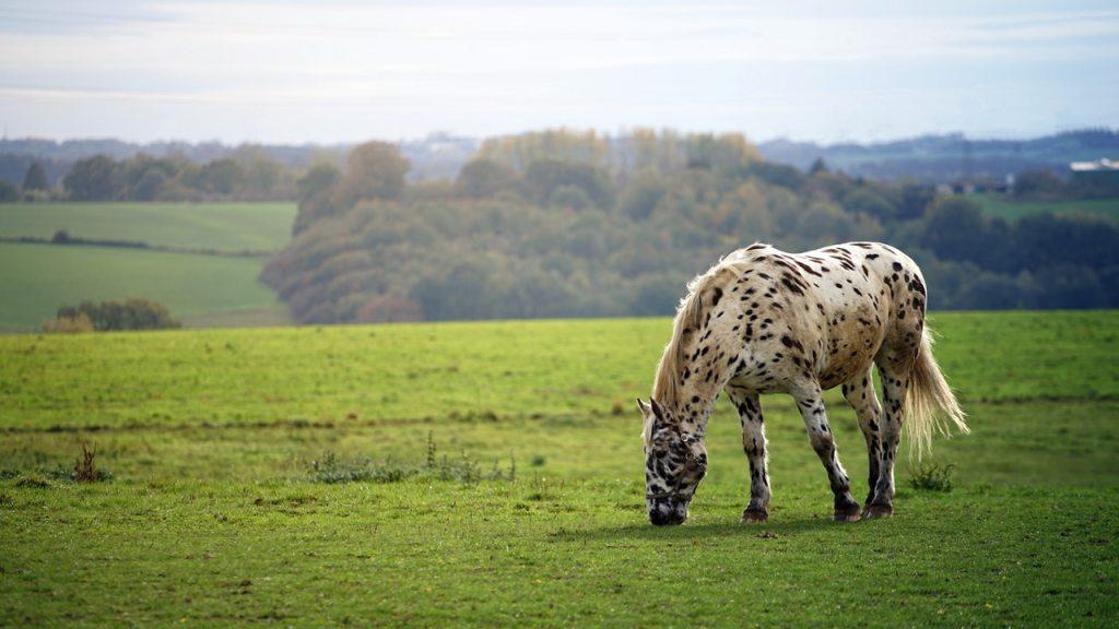 horse grazing   BioStar US