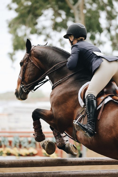 Horse Jumping and the need for bone remodeling