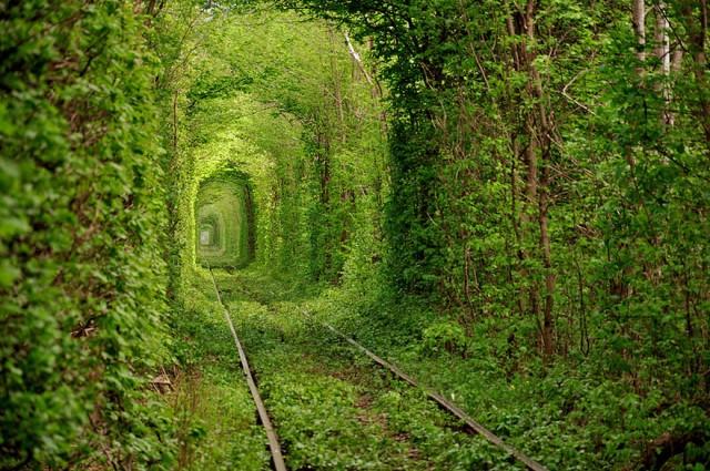 Ucraina, tunelul dragostei; sursa foto - www.boredpanda.com