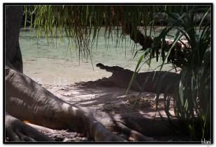 Krokodili