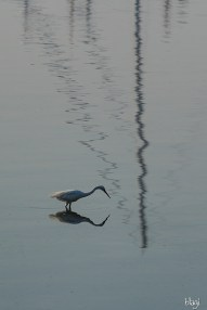 Ptica u moru, Stobreč, Hrvatska