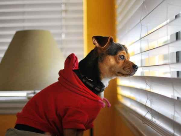 dog-window-waiting_34772_990x742
