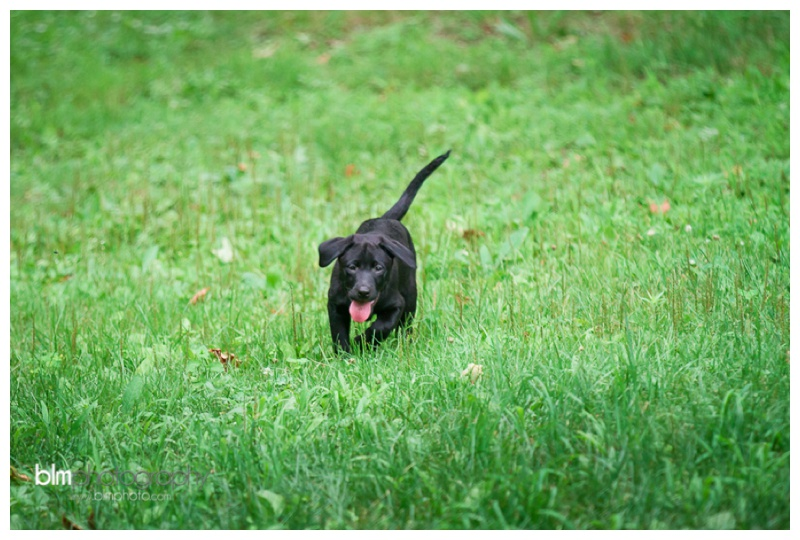 Webber-Puppies_072115-4032.jpg