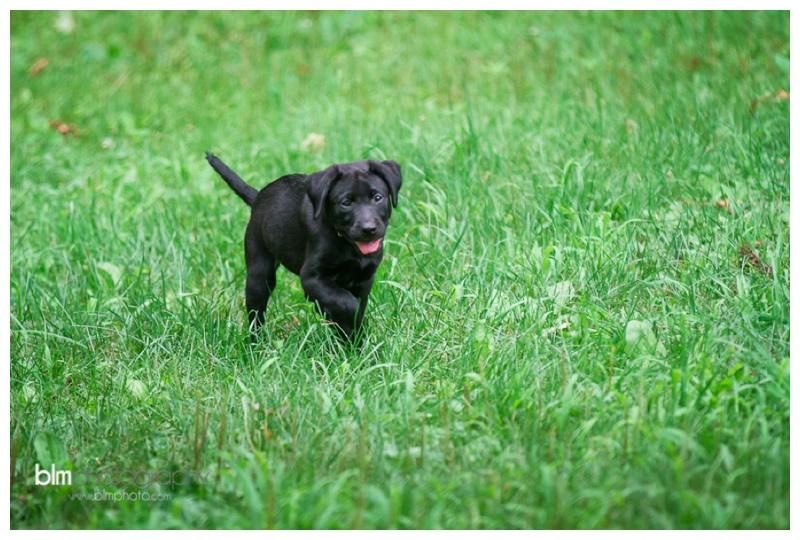 Webber-Puppies_072115-4036.jpg