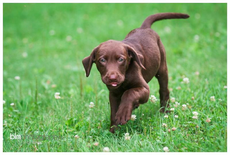Webber-Puppies_072115-4155.jpg