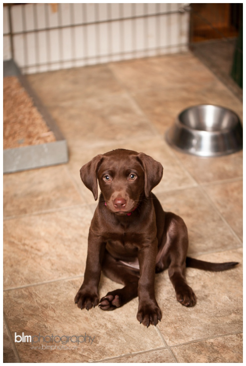 Webber-Puppies_072115-7954.jpg