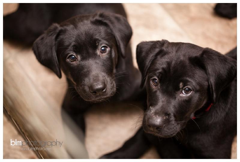 Webber-Puppies_072115-7960.jpg
