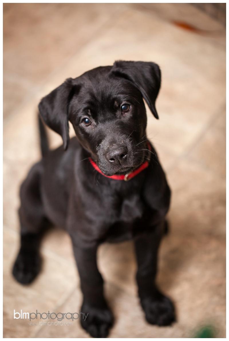 Webber-Puppies_072115-7966.jpg