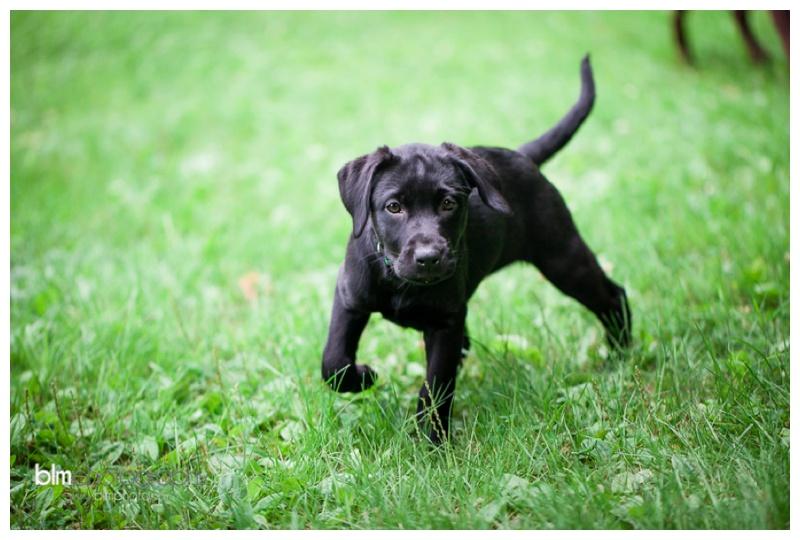 Webber-Puppies_072115-8013.jpg