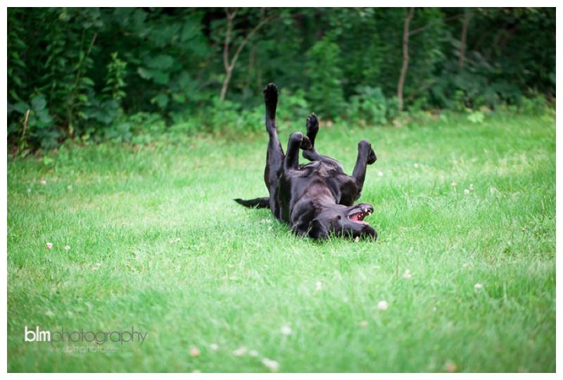 Webber-Puppies_072115-8073.jpg