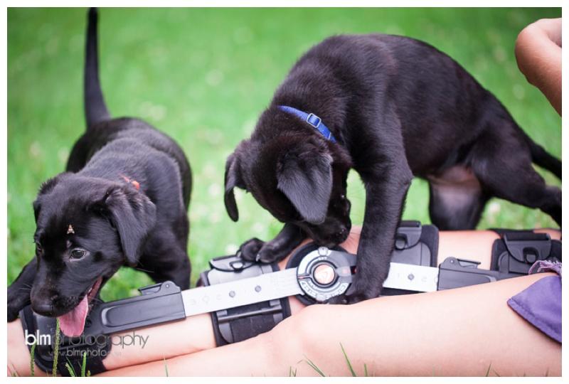 Webber-Puppies_072115-8074.jpg