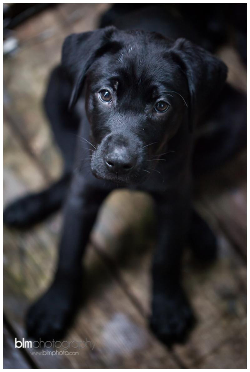 Webber-Puppies_072115-8310.jpg