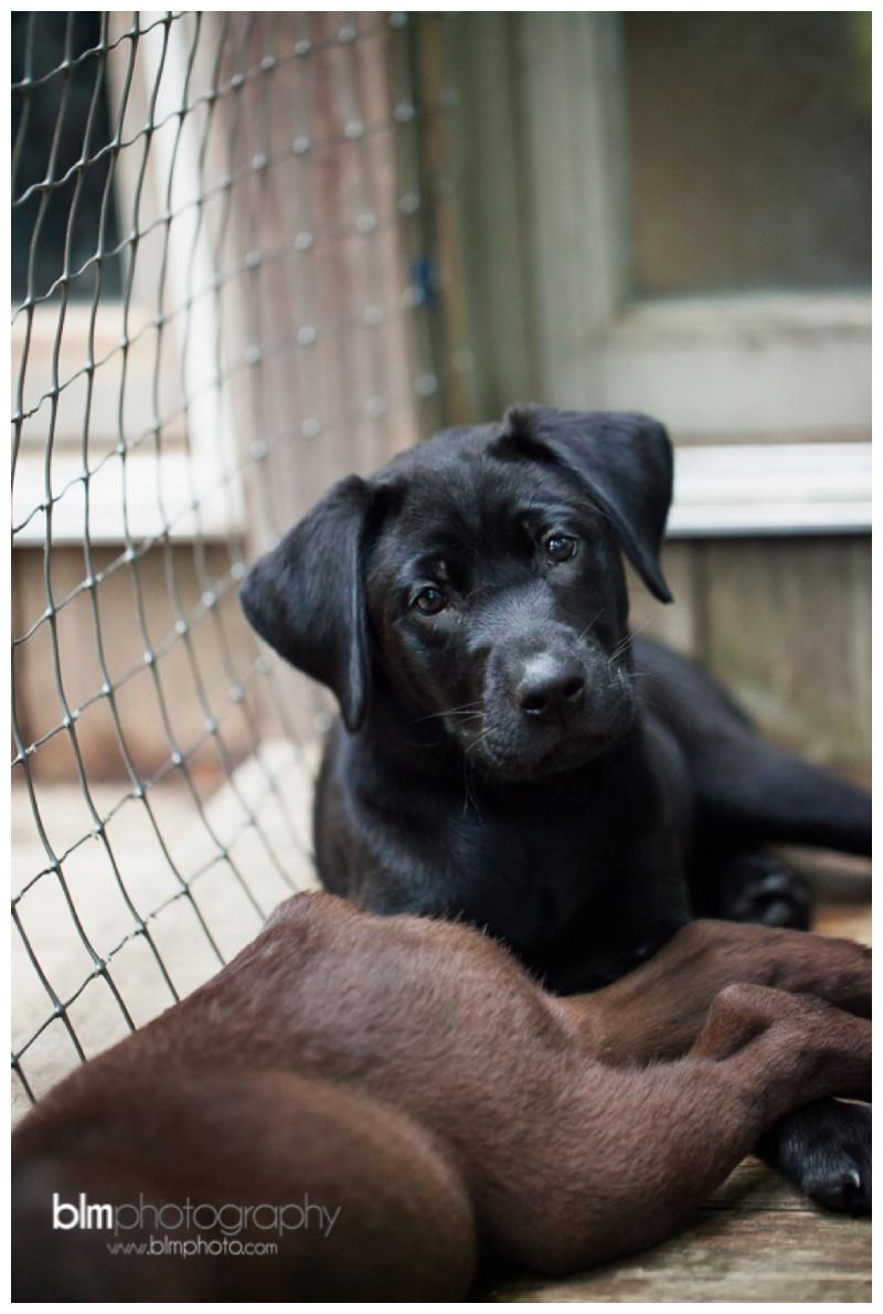 Webber-Puppies_072115-8412.jpg