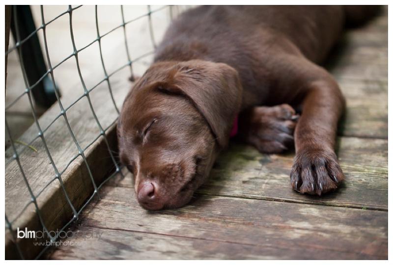 Webber-Puppies_072115-8427.jpg