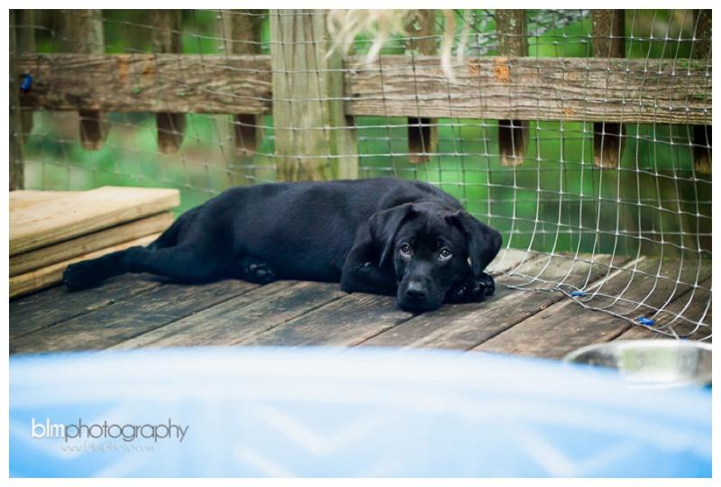 Webber-Puppies_072115-8430.jpg
