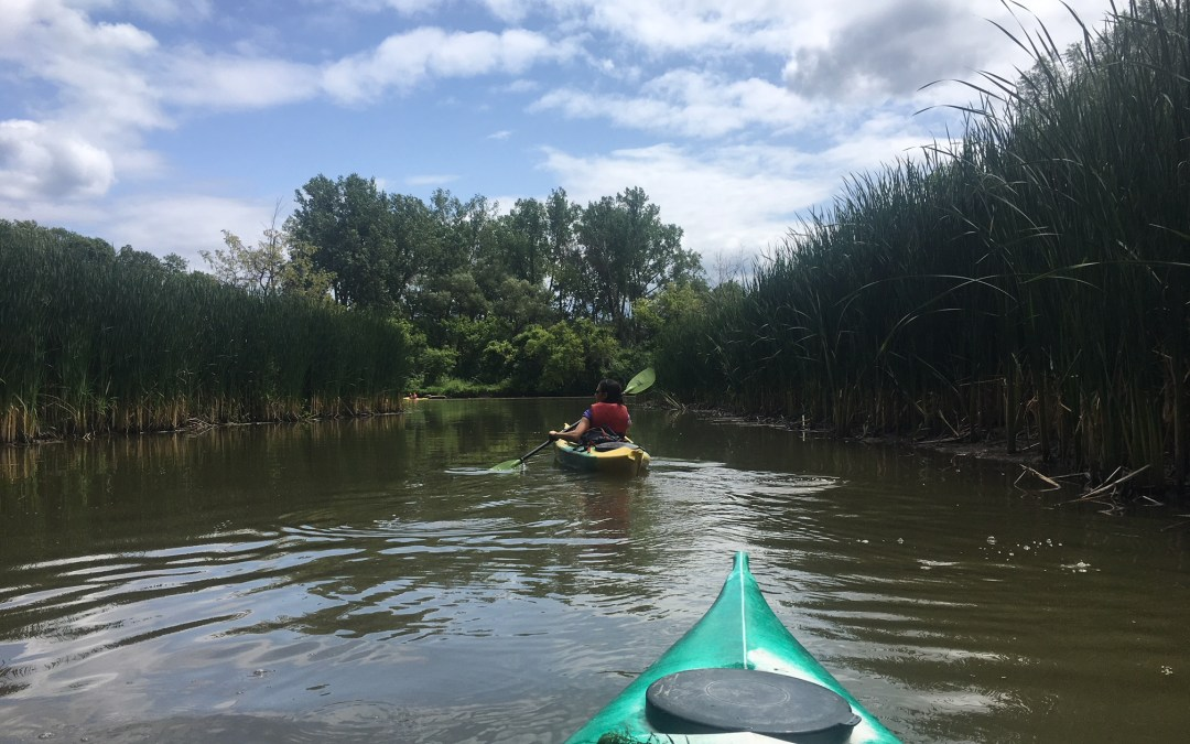 Paddling the Humber River