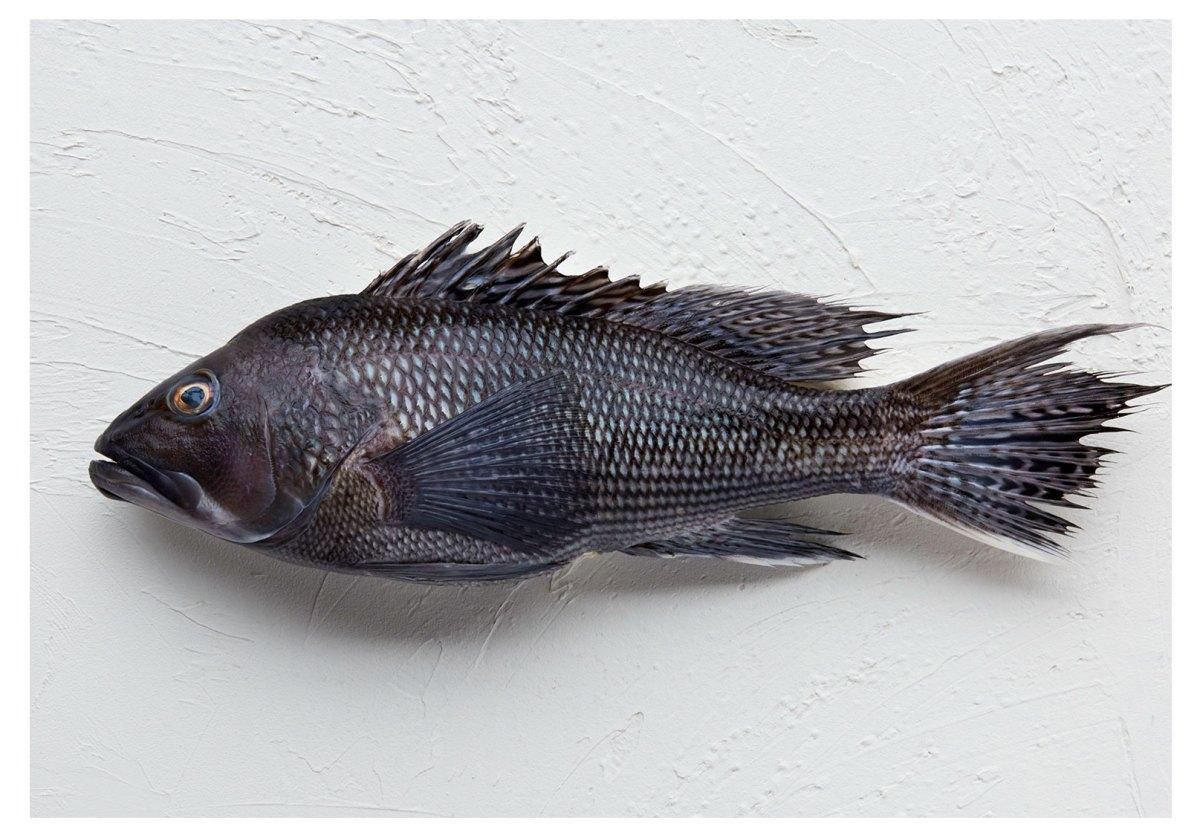 blog-seafood-myths-1