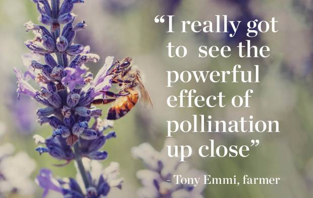 Pollination_Blog_3