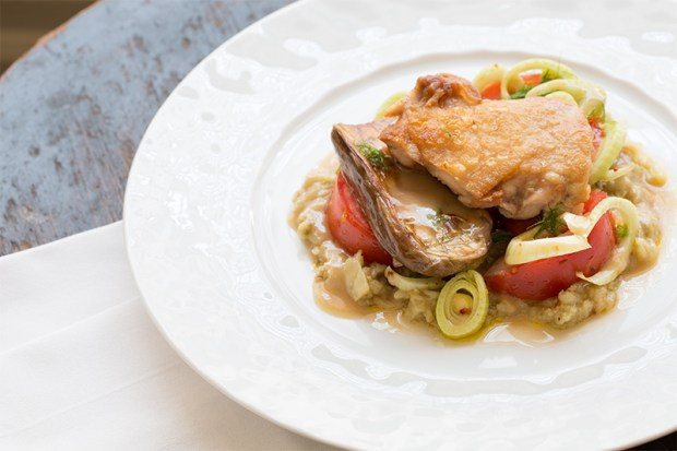 Pan-Seared Chicken Thighs with Roasted Baby Zebra Eggplants & Fennel Salad