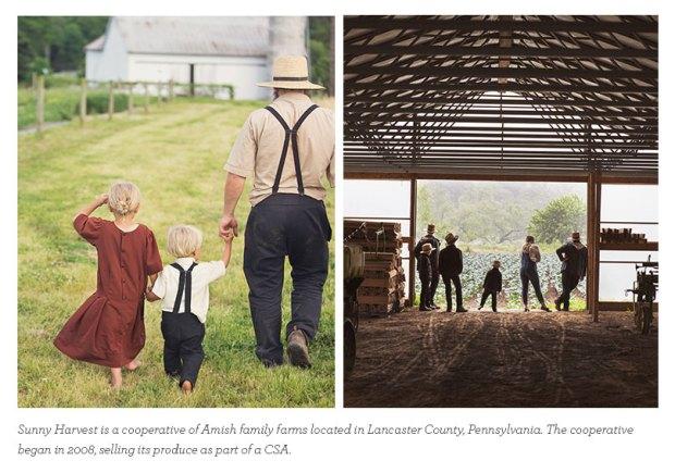 Sunny Harvest Farm