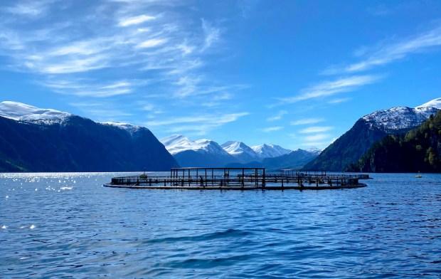 norwegian steelhead trout farm
