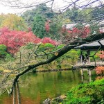 成田山公園紅葉まつり