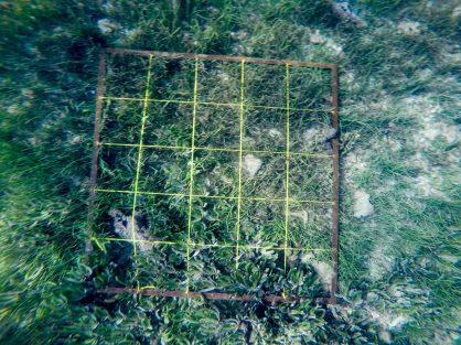 Nosy Dondosy seagrass quadrat
