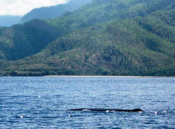 Sperm Whale | Photo: Joao da Costa