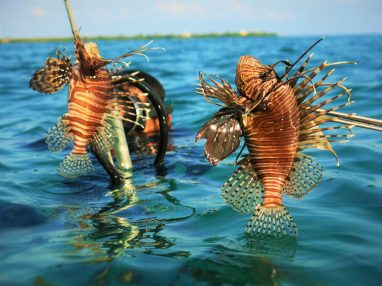 Developing markets for sustainable lionfish fisheries