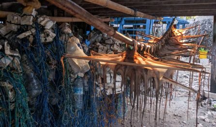 Octopus fishing is an important source of income on Darawa Island