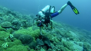 Simone wafts coral to determine its identity