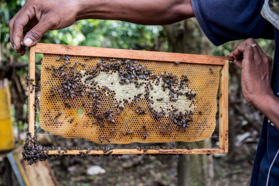 beekeeping madagascar