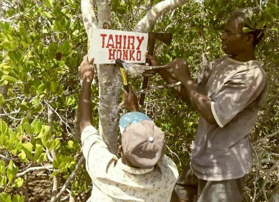 TAHIRY HONKO (preserving mangroves) delineated in September 2015