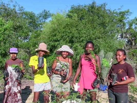 International Women's Day mangrove reforestation