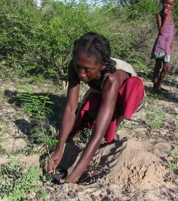 Befandefa reforestation