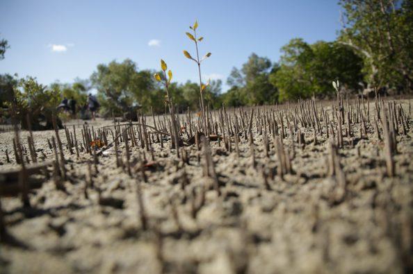 Mangrove roots | Photo: Gabriel Diamond