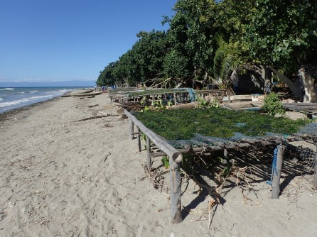 Seaweed drying near Biqueli village | Photo: Christina Saylor